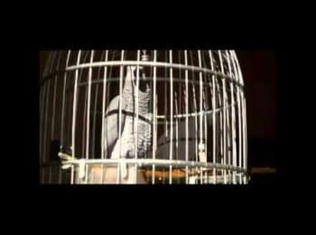 Попуга Василіса співає гімн / The parrot called Vasilise is singing the anthem