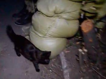 Кіт полка. База батальйону «Азов» у Маріуполі