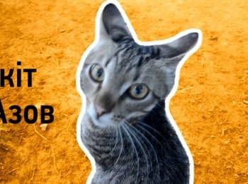 """Кіт """"Азов"""". Бойовий кіт батальйону"""