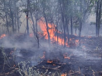 In Trehizbenka forest caught fire after the shelling from BM-21 Grad