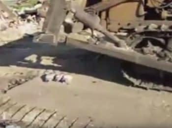 У Татарстані поліцейські і бульдозер цілий день знищували трьох санкційних гусей
