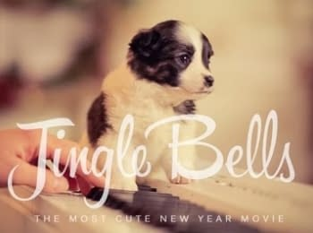 """""""Jingle Bells"""" українською у виконанні """"Шпилястих кобзарів"""""""